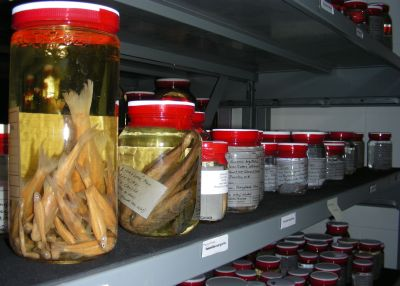 Alcohol-preserved fishes - what stories might they hold?