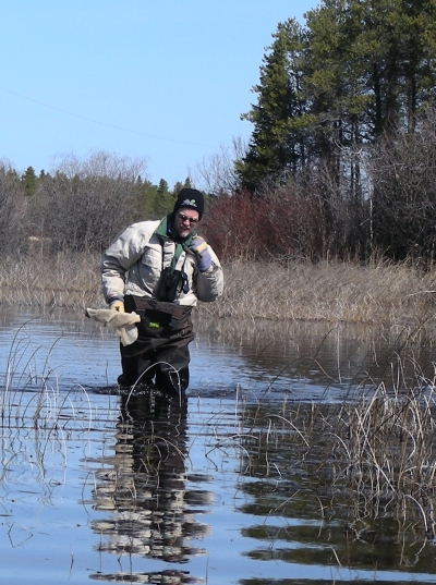 Outstanding in the field - or is that out standing in a pond?