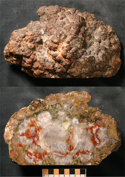 At first glance, the sauropod coprolite may look like a rather ordinary lump of rock, but its polished surface reveals a strikingly beautiful [jasper?] interior.