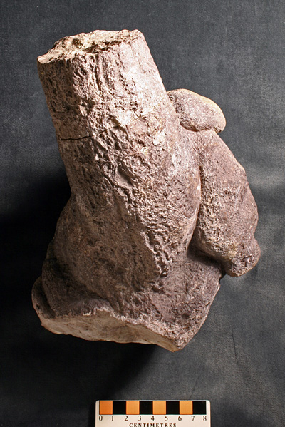 The splendid theropod coprolite donated by Ed