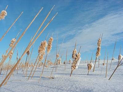 A frigid, but gorgeous prairie morning.