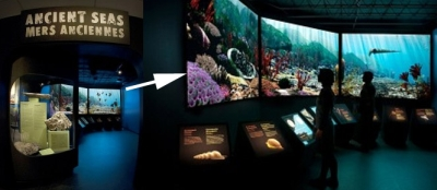 The Ancient Seas gallery and a peak at the large screen theatre that brings the fossils to life, including jellyfish and corals.
