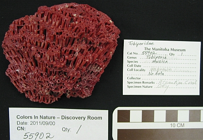 Standardized photos and written records are maintained to track the condition of each specimen over the exhibition period.