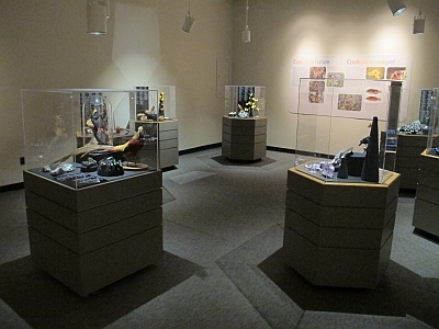 A partial view of the final installation showing several of the cases and a wall panel. Each case is lit individually to display the specimens to best advantage.