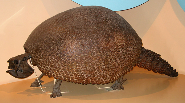 The glyptodont (above) and a detail of its ossicles (below)