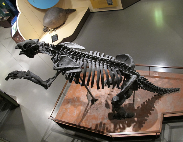 The Megatherium (foreground) and glyptodont (background), viewed from the Earth History mezzanine.