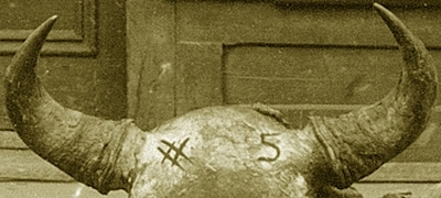 A close-up of the horns of one of the skulls from the 1911 Main Street photograph. Enhancing images like this provided a way to compare the horns of the undressed skulls with that of the Museum head mount to see if it could have been one of these animals.
