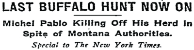 The New York Times headline of January 22, 1911 reporting the culling of the 'outlaw' bison.