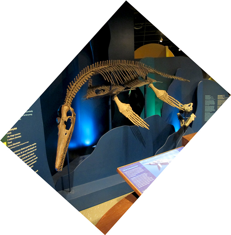 The plesiosaur on exhibit last week