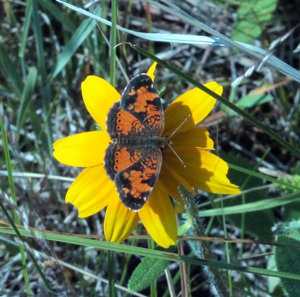 2_butterfly
