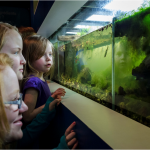 Kids viewing aquarium