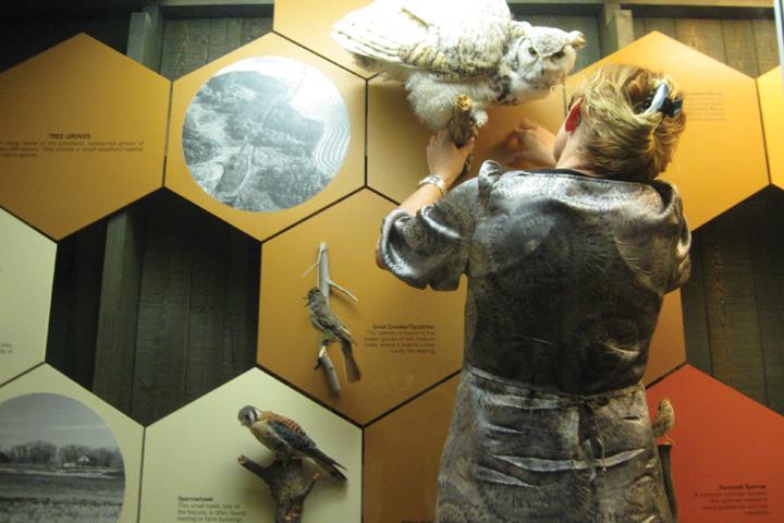 Replacing-specimen-in-Grasslands-Gallery