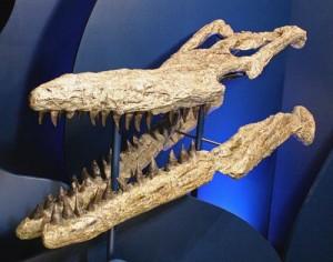 V-95_Tylosaurus_1_500
