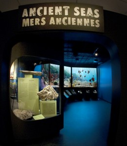 The Ancient Seas exhibit (above) and Teagan's view of it (below)