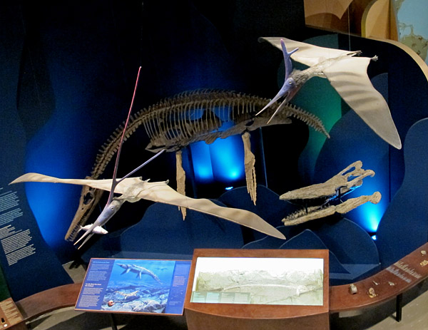 "Cretaceous exhibits in the Earth History Gallery: pterosaurs ""fly"" above the plesiosaur and the mosasaur skull."