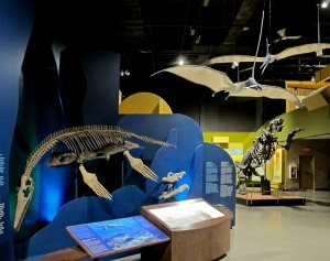 The Earth History Gallery
