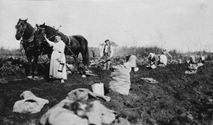 Klaas and Betje de Jong working on their potato field. Courtesy of Archives of Manitoba, Martha Knapp collection, 214.