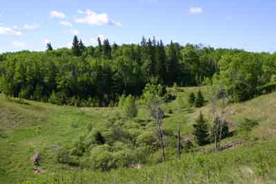 A photograph of fescue prairie and mixedwood forest south of Riding Mountain National Park.