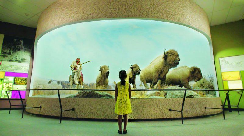 video_stills_bison-e1466175142621
