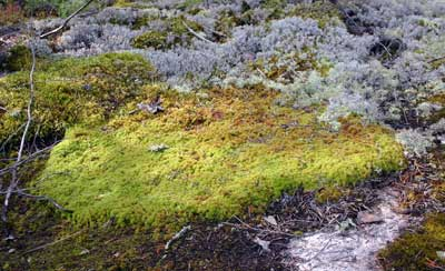 Sphagnum mosses absorb lots of water very quickly.