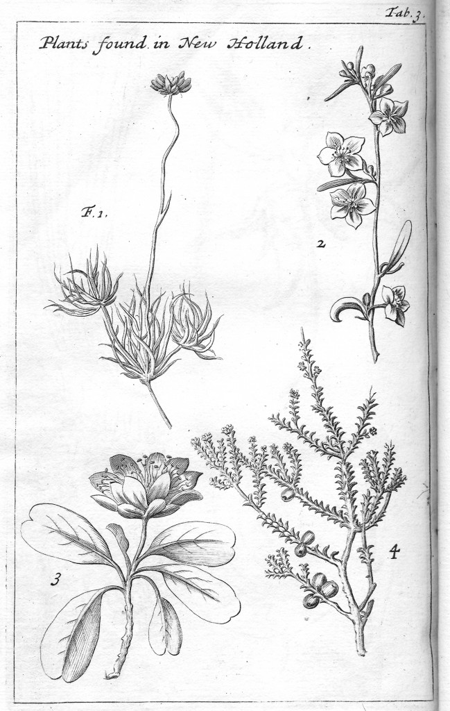"Drawings of plants found in New Holland, from Dampier's ""A Voyage to New Holland"". Drawing by William Dampier (Princeton University Library, Rare Books Division) [Public domain], via Wikimedia Commons"