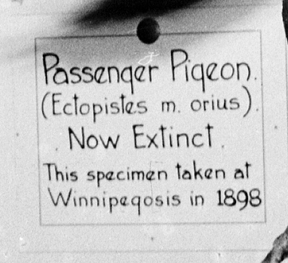 The old museum label.