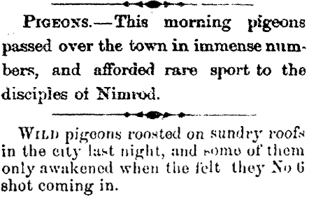 Local reports of passenger pigeons from Winnipeg newspapers, the upper from the Manitoba News-Letter of May 31, 1871 and the lower from the Manitoba Free Press of September 19, 1874.