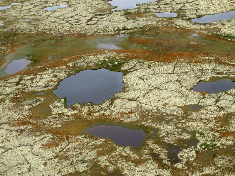 Up over the tundra the landscape is dramatically different: moss and ponds