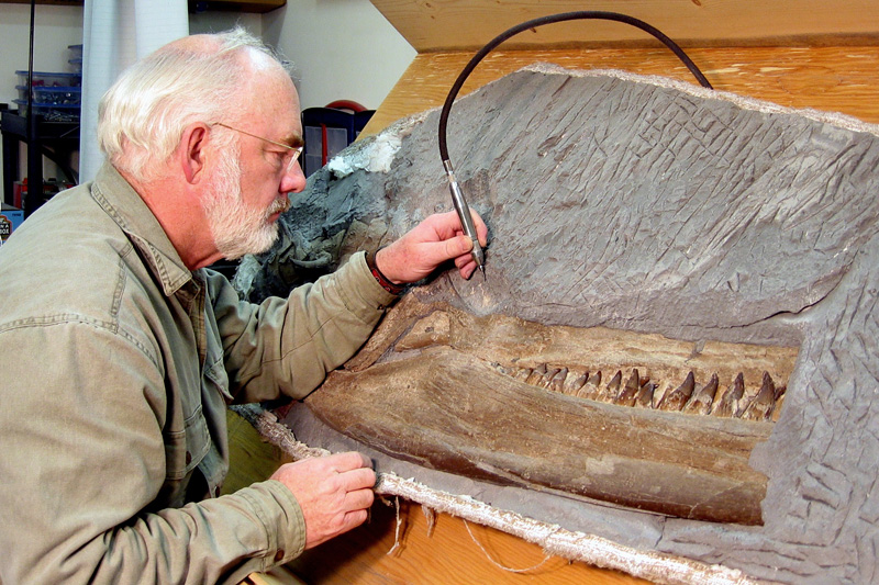 Wayne Buckley preparing the plesiosaur skull.