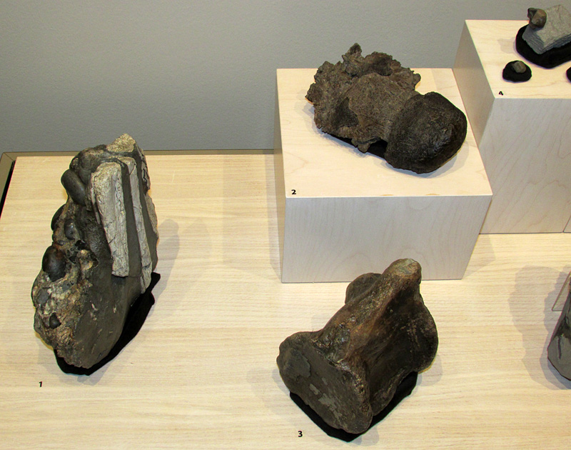 "Some of the fossils in the ""Cretaceous Community"" case."