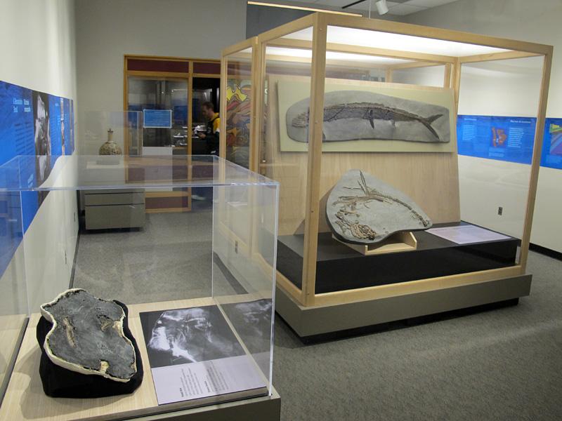 exhibit_from_bird_corner