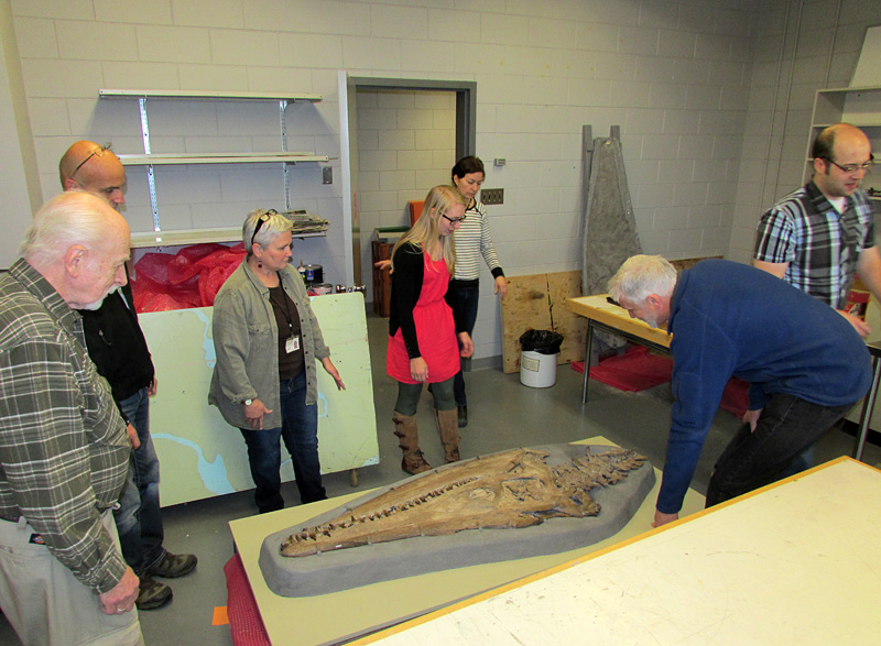 Placing the skull onto a cart, so that it can be moved to the exhibit