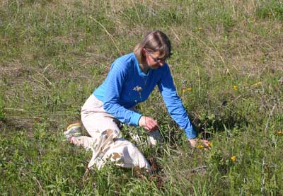 Photo of Dr. Robson doing field work in a prairie.