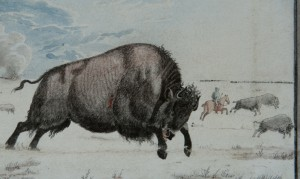 Detailed shot of bison in one of Peter Rindisbacher's paintings (ca. 1822-1824).