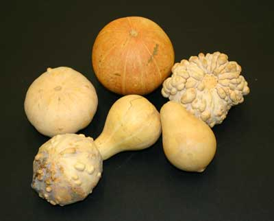 A photograph of six orange or yellow gourds.