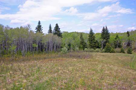 An image of a fescue prairie grassland with a Trembling aspen and white spruce forest behind it.