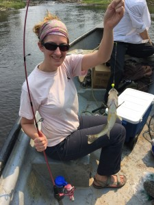 Caught my first pickerel, it was delicious!