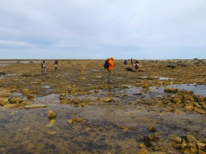 Our field group, walking across dolostone beds in the Silurian part of the cove.