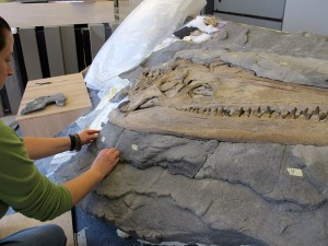 """Debbie fits pieces of """"shale"""" that she has created to cover the skull edges."""