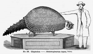 The glyptodont as featured in Ward's catalogue from 1866