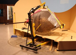 The engine hoist is placed over the glyptodont, which is attached by thick straps attached to steel beams.