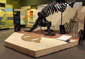Marc Hebert had built this extension to the ground sloth's platform. A cardboard cutout shows the location to which we will move the glyptodont.