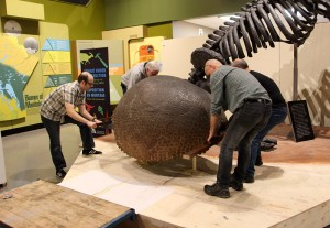 Traditional muscle power is used to slide the glyptodont to its final location.