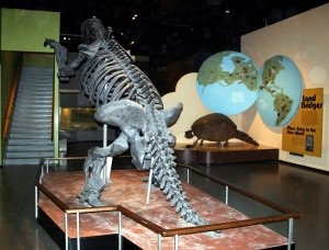 The ground sloth and glyptodont, in their positions in the Earth History Gallery from 1973 to 2016