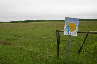 It was cool and rainy when I got to the Nature Conservancy's Yellow Quill Prairie Preserve.