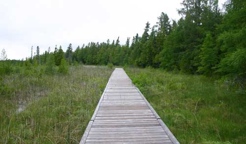 The boardwalk through the fen at the Brokenhead Wetlands Interpretive Trail.