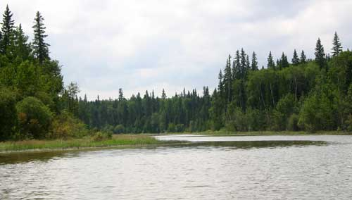 Boreal wetlands are best visited by boat.