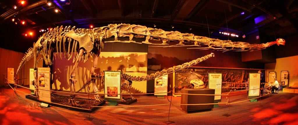 Giant Dinosaur Skelaton