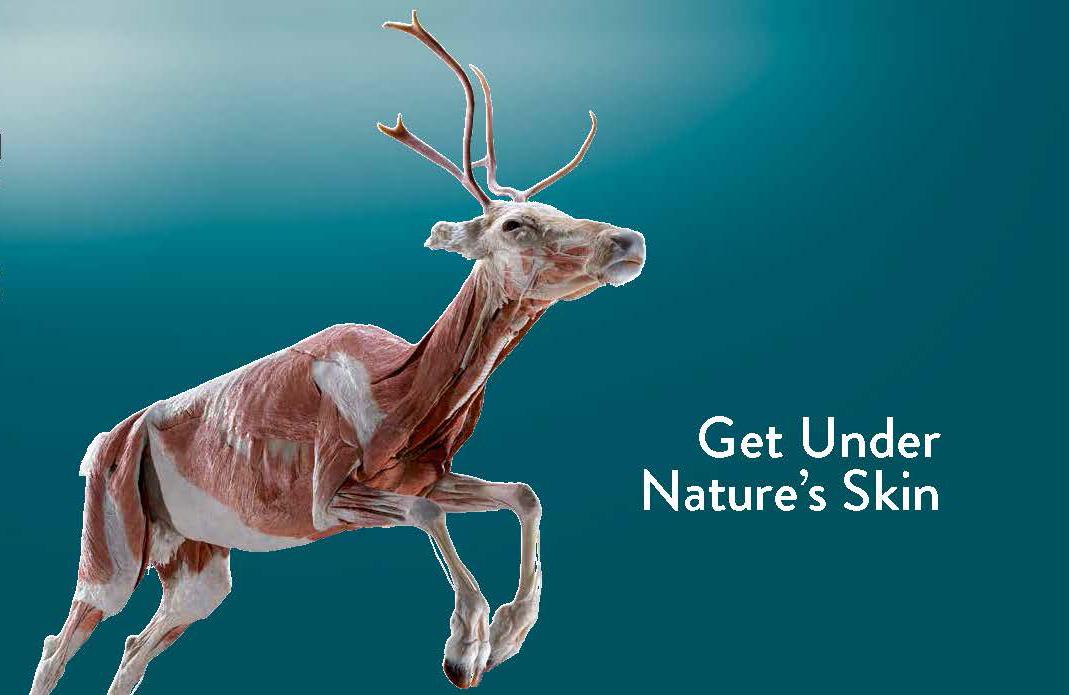 Animal Inside Out Elk