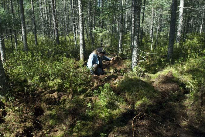Grant Digging roots